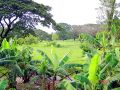Big Farm For Sale In La Vega